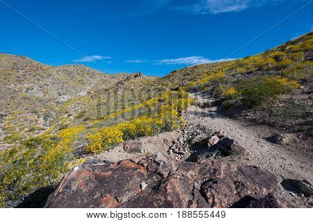 Bright Yellow Flowers Contrast Blue Sky In Desert