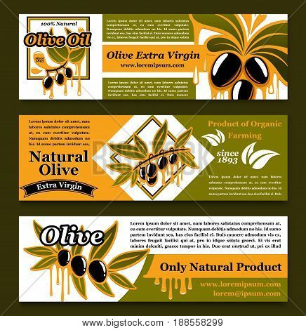 Olive oil banners set with black and green olives for extra virgin natural oil product. Vector design of olive ripe fruits and drops with ribbons for organic cooking oils, farm market or store