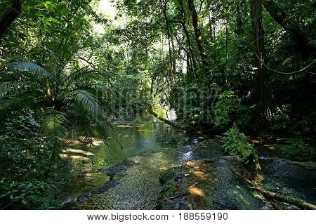 in middle of the Jungle, a small creek