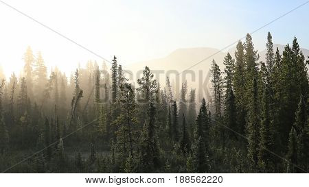 Misty tundra forest in the far north