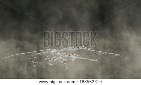 Ducks at a misty morning, lake in Canada