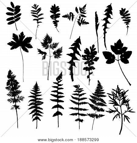 Vector set of wild plants and leaves silhouettes, isolated herbs, monochrome floral elements, hand drawn natural illustration