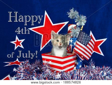 Patriotic calico kitten sitting in red white stripped box tinsel with white stars on table in front of her. blue background with red stars outlined in white American flag kitten Happy 4th July text.