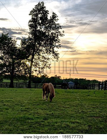 Horses grazing in a Kentucky pasture at sunset in vertical format