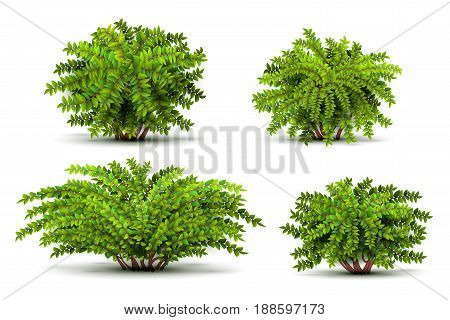Shrubbery, 3d isometric bushes isolated on white vector set. Green shrubbery illustration