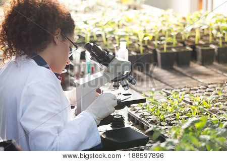 Young biologist looking at microscope with seedlings around her in greenhouse. Microbiology biotechnology and bioengineering concept