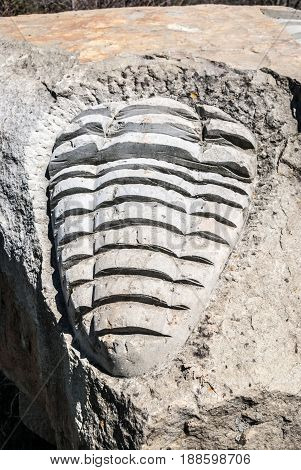 stone sculpture of trilobite in Javorniky mountains in Slovakia