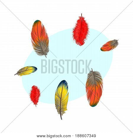 Hand drawn set of various colorful bird feathers, sketch style vector illustration with space for tex. Realistic hand drawing of peacock, parrot, dove, falcon bird feather