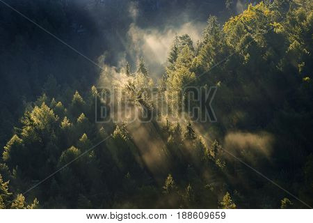 Foggy Landscape. Misty Morning In A Valley Of Bohemian Switzerland Park. Landscape Of Czech Republic