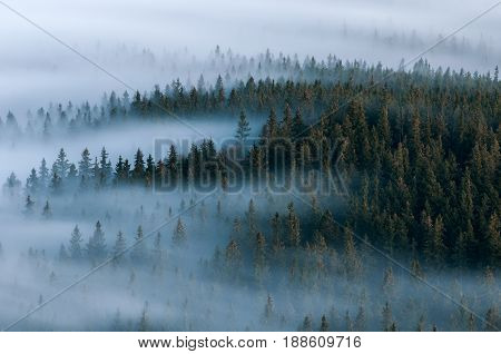 Foggy Landscape. Foggy Valley Of Sumava National Park. Detail Of Forest, Boubin Mountain Of Czech Re