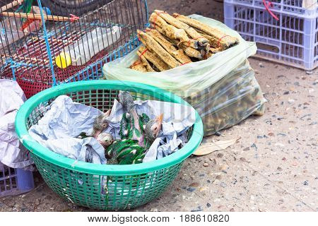 Baby parrots in market for sale .