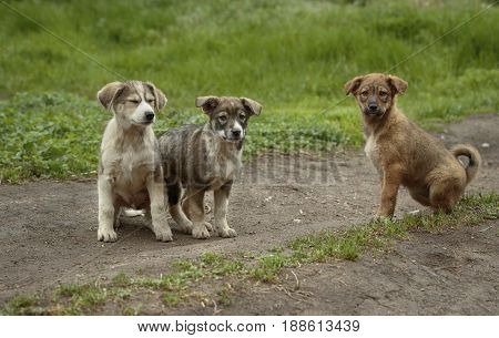 Three funny colorful puppies sits on the ground and one of them squints