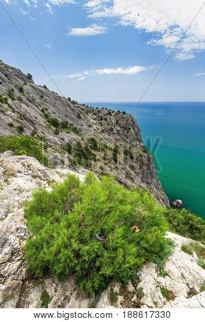 a Bush growing at high altitude / the surroundings of the Genoese fortress Crimea