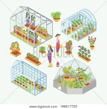 Set of 3d glass greenhouse, hotbed with seedlings. People water plants, flowers, vegetables in garden bed, flowerbed. Isometric colorful vector illustrations