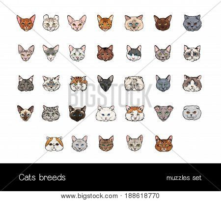 Set of muzzles different cats breeds. Big ollection of hand drawn colorful illustrations