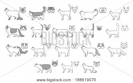 Set of cats breeds, side view, muzzle. Collection with hand drawn monochrome realistic illustration. part 2.