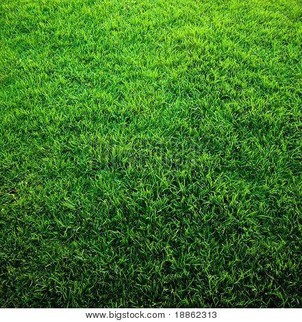 Hoge resolutie groen gras textuur