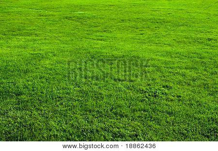 Green grass field from a park