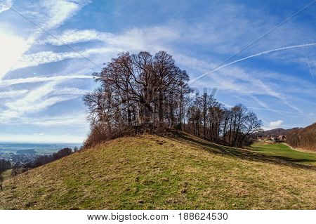 Spring Tree On The Hill, Natural Landscape