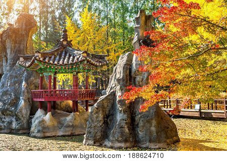 Autumn in Nami island in South Korea.