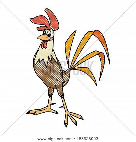 rooster bird farm domestic male image vector illustration