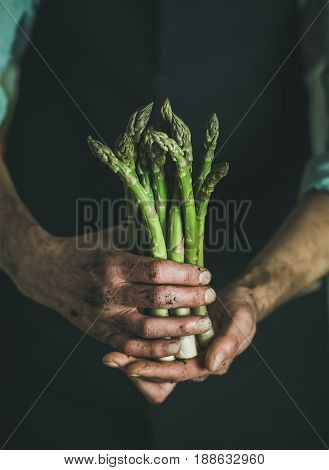 Bunch of fresh uncooked seasonal green asparagus in dirty man's hands, selective focus. Gardening and local farmer's market concept