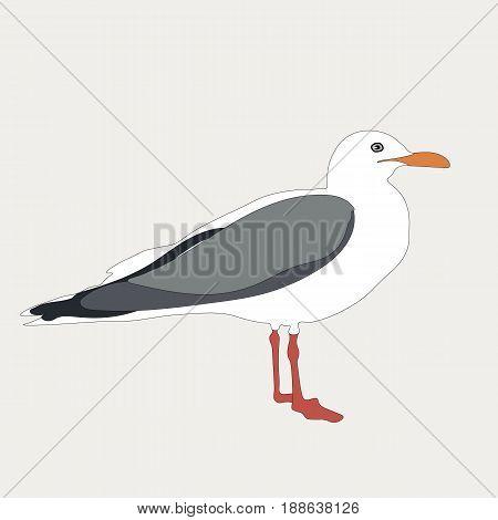 Seagull isolated on a background. Vector illustration bird.