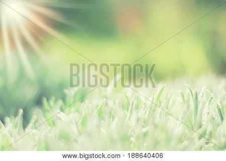 Green delicate background with grass and drops of dew