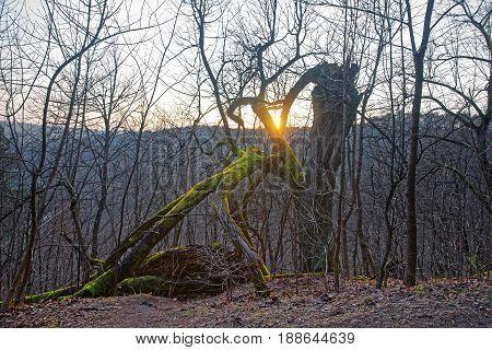 Sundown At Forest Of Belmontas Pavilniai Regional Park Near Vilnius