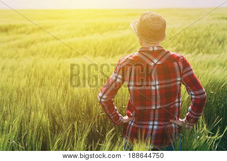 Concept of responsible farming female farmer in cereal crops field woman agronomist looking over the wheat field to the horizon on a windy day and planning future steps in agricultural production