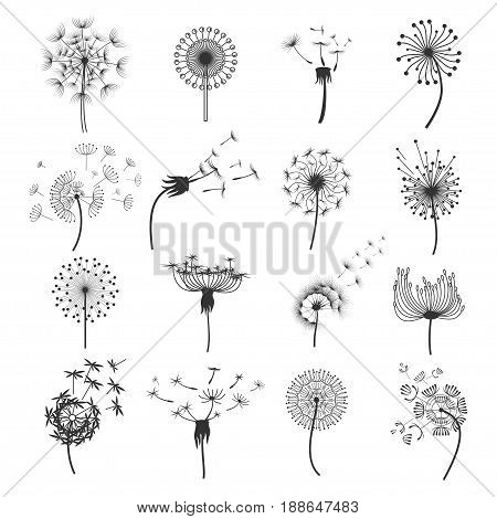 Dandelion fluffy blowball in the wind set, tiny soft parachute seed heads in the air, fragile puffballs. Vector flat style illustration isolated on white background