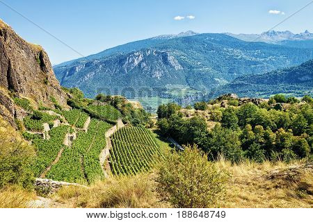 Landscape In Sion With Vineyards Bernese Alps Mountains Valais Switzerland