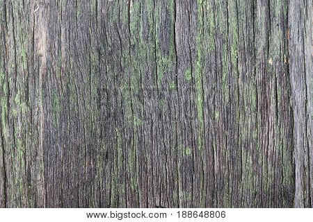 Wooden background texture with faded shabby green paint.