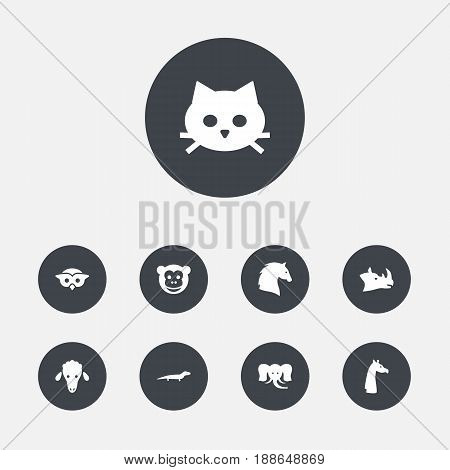 Set Of 9 Alive Icons Set.Collection Of Steed, Rhinoceros, Lamb And Other Elements.