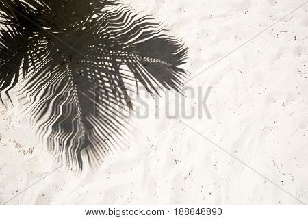 Palm trees cast shadows on the smooth golden sand of a remote tropical island beach in Dominican Republic