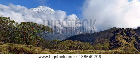 Mountain panorama Landscape in Himalaya. Blooming of Rhododendron tree and Annapurna South peak. Nepal, Annapurna region, Mardi Himal track.