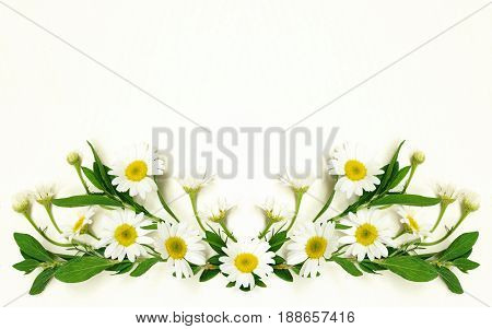 Daisy flowers arrangement on white background. Flat lay. Top view.