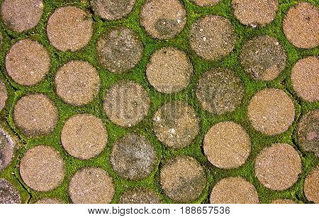 Cement pavement with moss growing between blocks