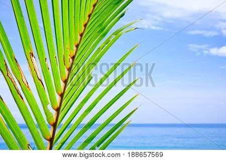 Coconut leaf and sea during sunny day