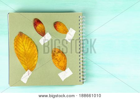 An overhead photo of a herbarium, a spiral notebook with taped autumn leaves, on a teal background with a place for text