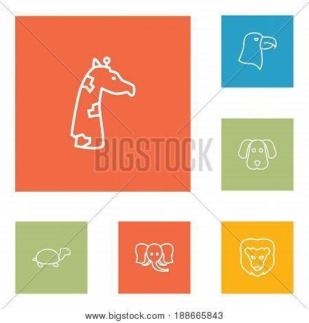 Set Of 6 Zoo Outline Icons Set.Collection Of Lion, Turtle, Elephant And Other Elements.