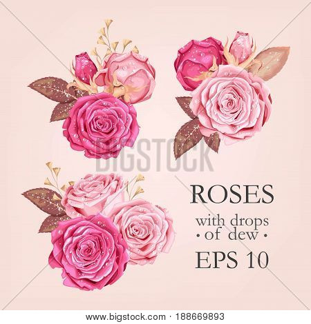 Vector set of pink rose flower, bud and leaves with drops of dew