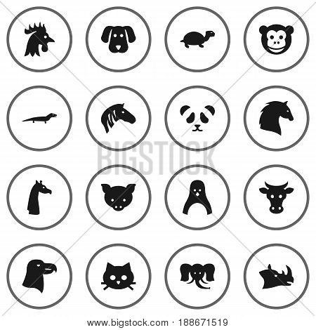 Set Of 16 Zoo Icons Set.Collection Of Rooster, Gecko, Pussy And Other Elements.