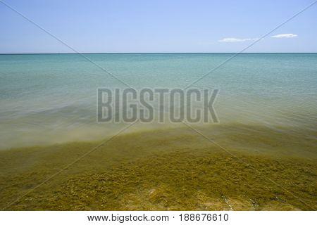 Coastal Sea Waves. Seawater With Seaweed. Coastal Algae. Sea Beach.