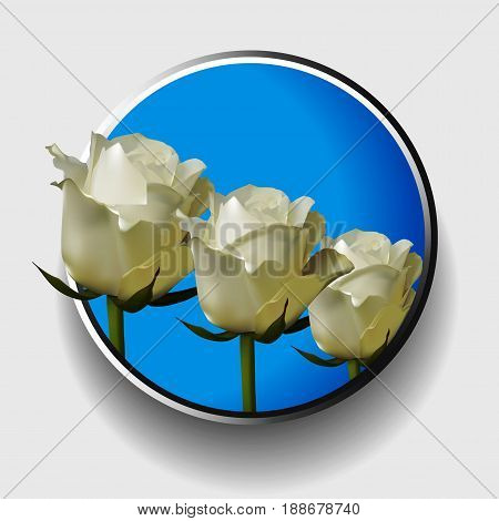 3D Illustration of a Trio of White Ivory Roses Over Blue Metallic Border on White Background