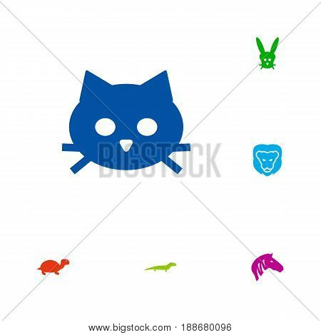 Set Of 6 Animal Icons Set.Collection Of Pussy, Gecko, Tortoise And Other Elements.