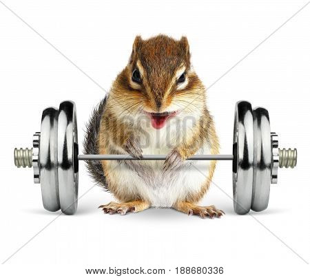 Funny fitness animal chipmunk with dumbbell .