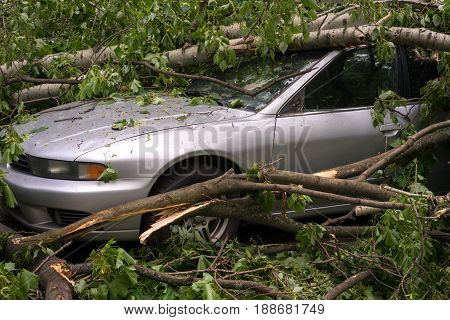 Moscow Russia - May 30 2017: a car filled with trees fallen during a strong hurricane