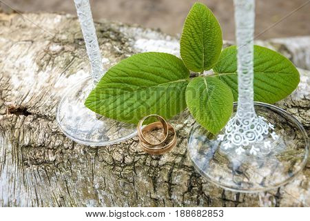 Wedding Rings On A Log With Green Leaves And Weding Glass.
