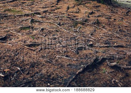 Roots Of Old Tree Without Ground - Organic Background